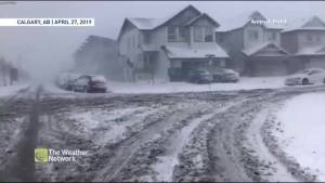 Much of Alberta hit with spring snow storm