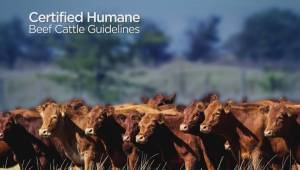Guidelines for Certified Humane beef cattle