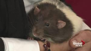 Adopt a Pet: Basil and Chinook