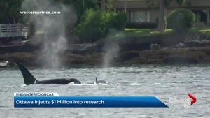 Ottawa announces funding for Killer Whale research