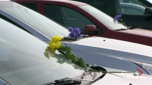 Flowers placed on Humboldt Broncos players' vehicles following fatal crash