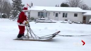 Moncton man and dog sled team harness Christmas cheer