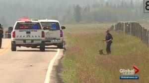 Tourist shot in head while driving near Morley, Alta., RCMP investigate road rage as motive