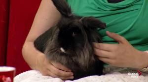 Edmonton Humane Society: Benjamina