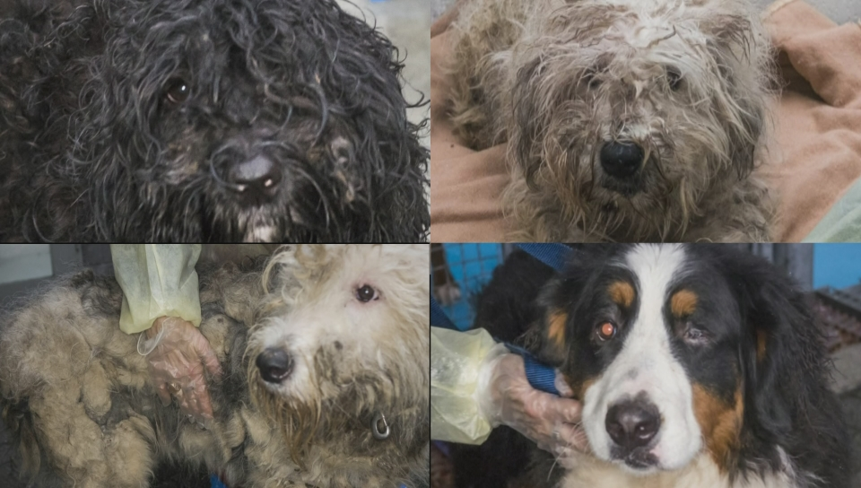 66 Dogs Seized From Langley Puppy Mill Reunited One Year