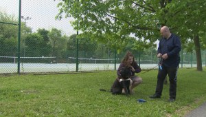 Montreal family kicked out of park over service dog