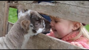 Here's your chance to snuggle a lamb!