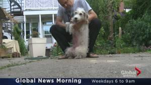 Global News Morning headlines: Wednesday, June 22