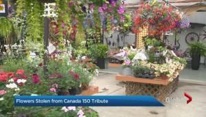 Canada Day flower display at King City garden centre stolen