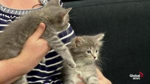 Second Chance Animal Rescue Society: kittens!