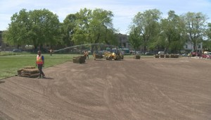 Montreal to hold consultations on closing softball field