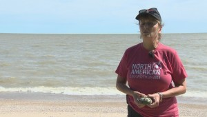 Focus Manitoba: How zebra mussels could cause province-wide power outages