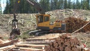Okanagan lumber industry hurting like the rest of province