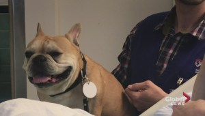 Therapy dogs at the Montreal Neuro