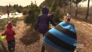 Quinn Farm hosts massive Easter egg hunt