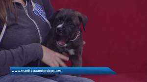 Adopt A Pal: Manitoba Underdogs Rescue