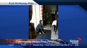 Animal rescue groups work to reunite pets with Fort McMurray fire evacuees