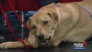 Pet of the Week: Howie