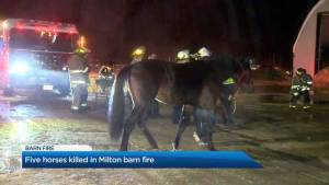 Five horses killed in Milton barn fire
