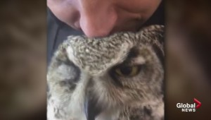 Owl rescue highlights softer side of Calgary law enforcement