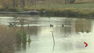 Major upgrade coming to Mallroy Drainage Basin