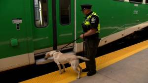 Team of bomb-sniffing dogs coming to Union Station