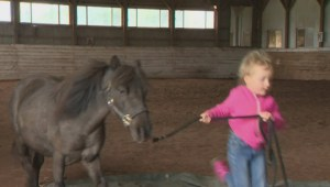 Healing anxiety with horses