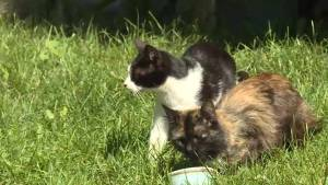Bath, Ont. is dealing with a feral cat problem, say residents
