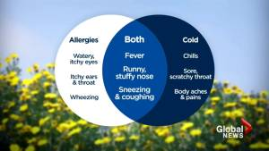 Spring sniffles: Allergies or the common cold?