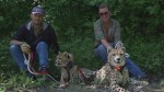 B.C. man fights to keep cheetahs