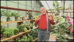 """Hands off the houseplants"" : Greenhouse owner Roger Hill  says no transplanting until March."