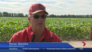 Boonstra Farms offers fresh juicy berries to pick this summer