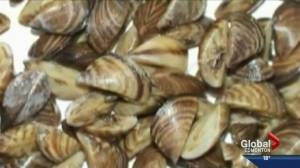 Keeping zebra mussels out of Alberta