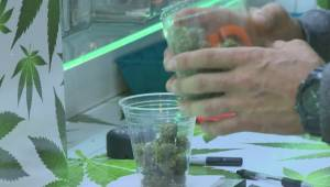 Vernon asks the public to weigh-in on pot shops