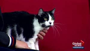 Calgary Animal Services Pet of the Week: Carla