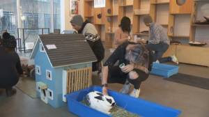 Vancouver's cat cafe transforms into a bunny bar