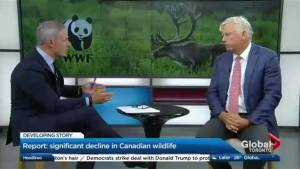 Canada's wildlife is at serious risk