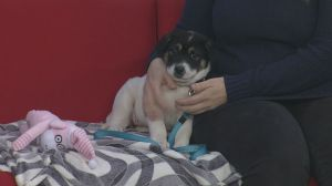 Adopt a Pet: Cinderella the puppy needs a home