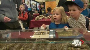 A look at Aggie Days 2018 through the eyes of a child in kindergarten
