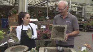GardenWorks: Alpine Planter