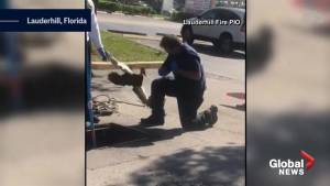 Florida firefighter faces undeserved wrath of angry duck