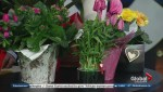 Fresh ideas for easy care Valentine's Day plants
