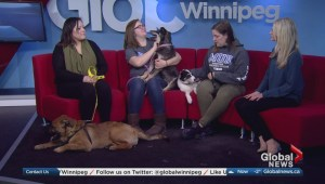 Adopt a Pal: Manitoba Underdogs