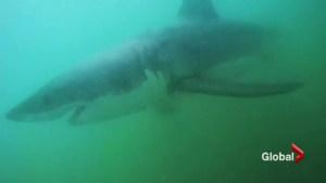 Shark sightings in Orange County; warnings in Southern California