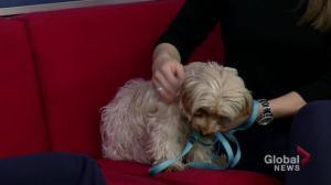 Bridget looking to be adopted from Saskatoon SPCA