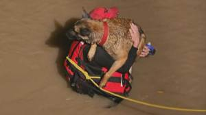 Homeless man and his dog lifted to safety in swift water rescue caught on camera