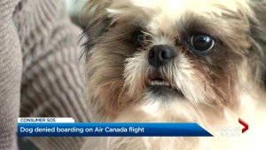 Toronto dog denied boarding on Air Canada flight due to carrier size