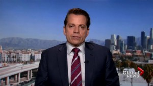 Trump determined to get border wall for his base: Scaramucci
