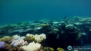 Bleaching has destroyed over a third of the coral in the Great Barrier Reef: Experts