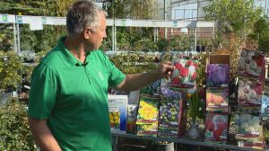 Gardening Tips: planting bulbs and fertilizing lawns